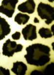 Leopard Grey White Velvet